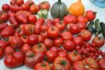 tomatoes-2-002