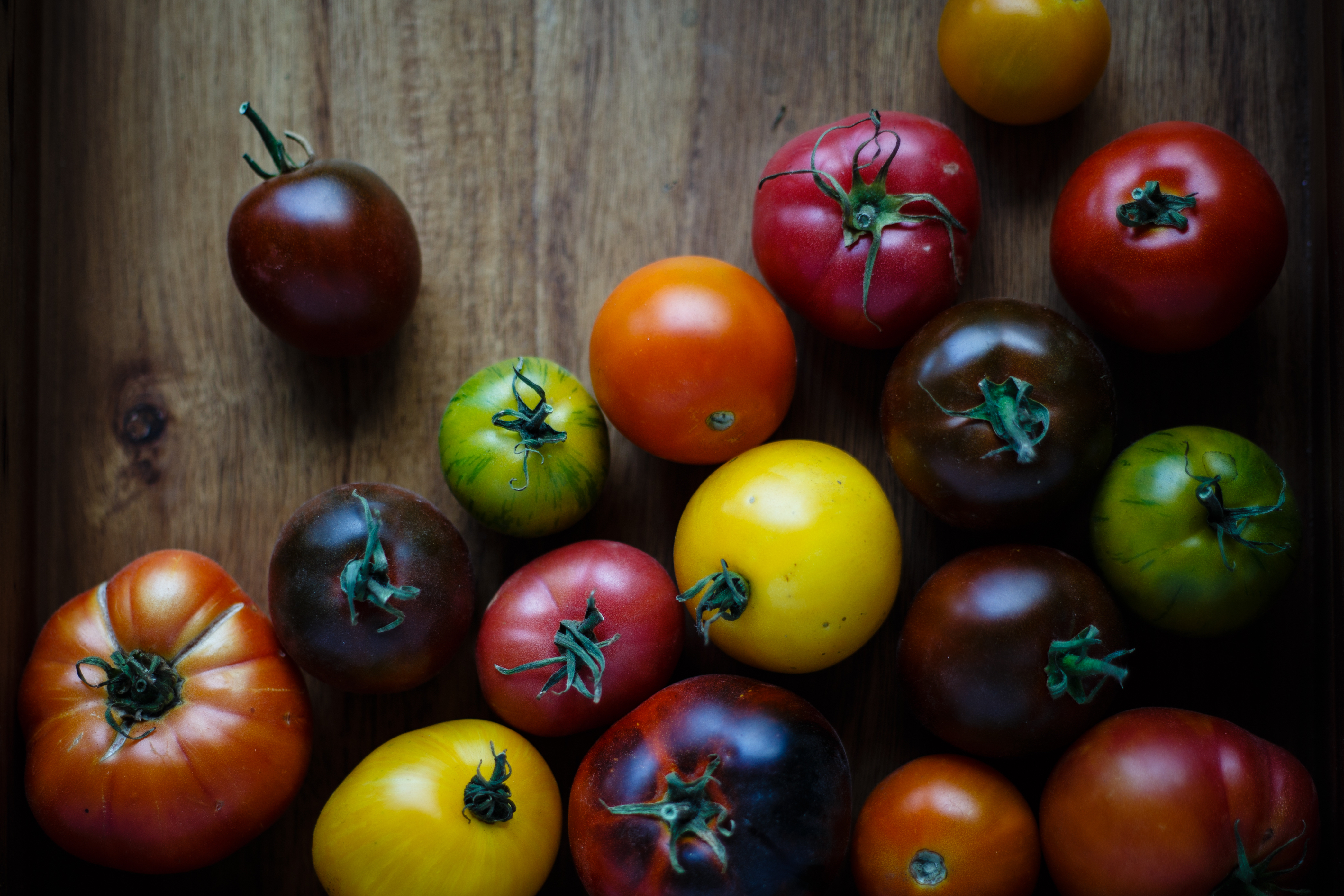 TOMATOES: A GLUT!!!